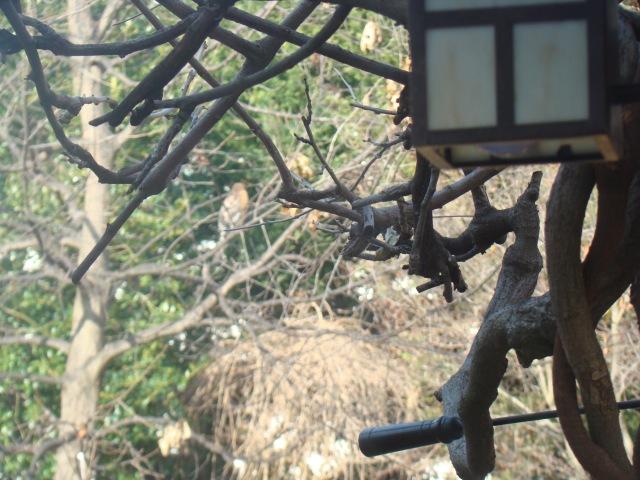 Aguila en el jardin