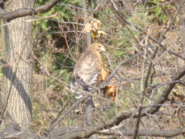 Aguila en el jardin2